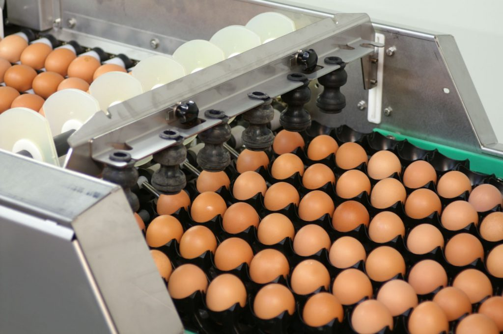 egg packing machine price
