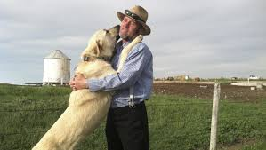 how to import kangal dog from turkey