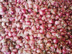 onion companies