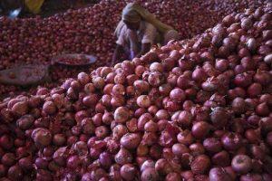 onion wholesalers