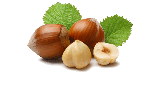 Hazelnut suppliers Turkey