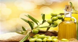 Wholesale olive oil dealers … The best 10 olive oil wholesale suppliers