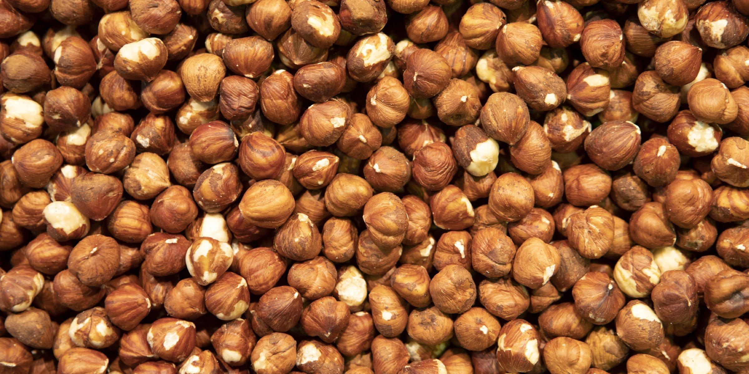 hazelnut price in Turkey