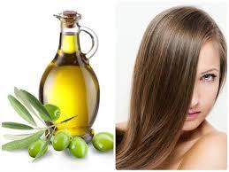 olive oil for hair shampoo