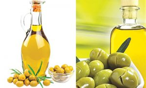 Olive oil factory in turkey
